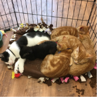 Kittens from 9 Lives Rescue at EarthWise 1 Year Anniversary