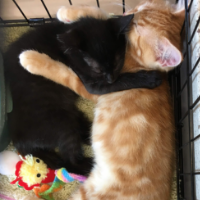 9 Lives Rescue kittens at an EarthWise adoption fair