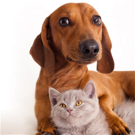 Dog & Cat Heath Care