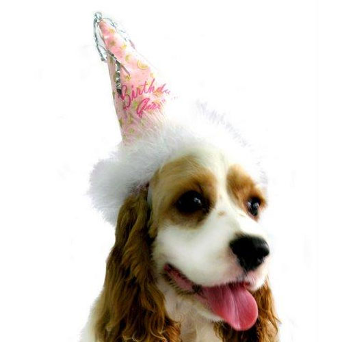 PAMPET / Puppe Love Dog Hat, Birthday Girl, Small