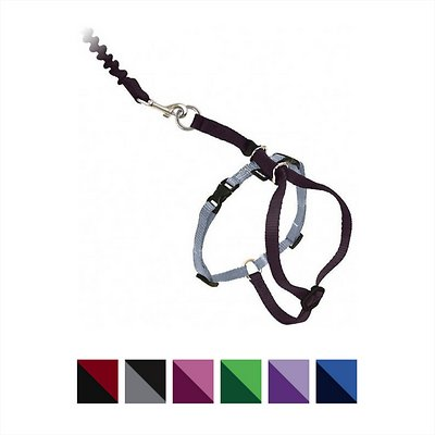 PetSafe Come With Me Kitty Harness & Bungee Cat Leash, Black/Silver, Large