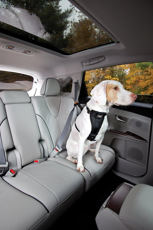 Kurgo Seat Belt Tether