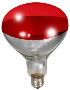 Heat Lamp Bulb for Brooder Reflector - Red 250w