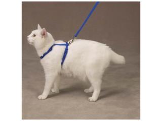 """Savvy Tabby Nylon Cat Harness Sz 12""""-16"""" Nautical Blue"""