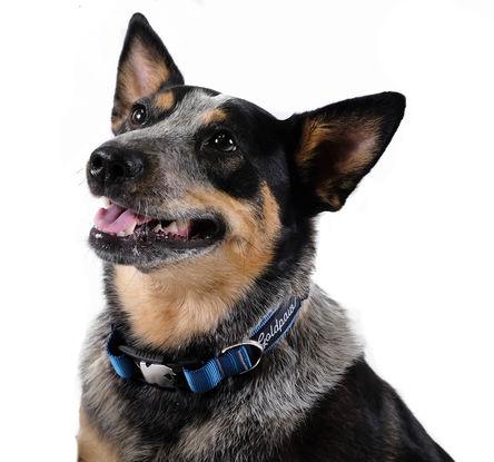 Gold Paw SwiftLock Dog Collar, Marine, Small