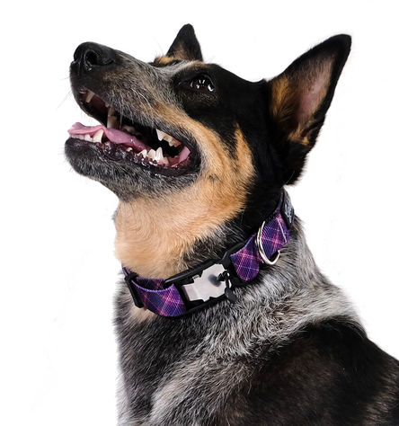Gold Paw SwiftLock Dog Collar, Mulberry Plaid, Small