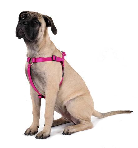 Gold Paw Step-in SwiftLock Dog Harness, Fuchsia, Small