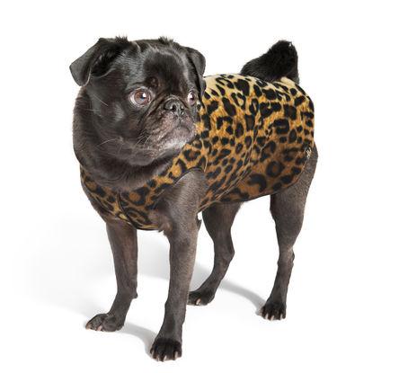 Gold Paw Stretch Fleece Leopard Dog Coat, 30
