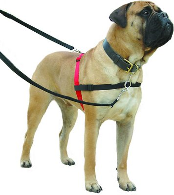 Halti Dog Harness, Black/Red