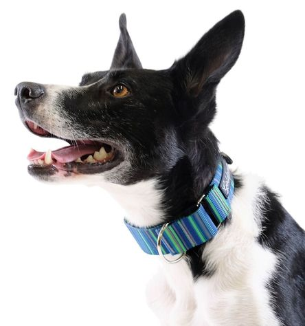 Gold Paw Martingale Dog Collar, Riverbed, Small