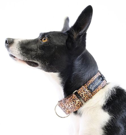 Gold Paw Martingale Dog Collar, Leopard, Small