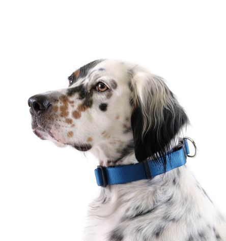 Gold Paw Side Release Dog Collar, Marine, Small