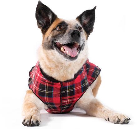 Gold Paw Duluth Double Fleece Dog Coat, Red Tartan & Black, 6