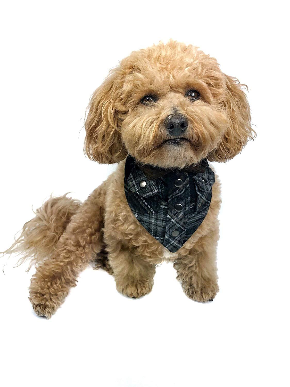 Tail Trends Lumberjack Cotton Dog Bandana, Bear Hugger, Large