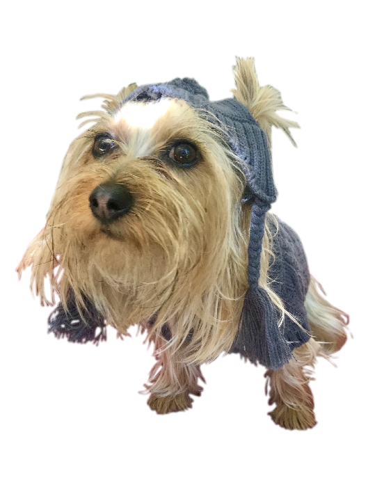 The Dog Squad Scottish Cable Knit Hat, Charcoal Grey, XX-Small/X-Small, XX-Small/X-Small