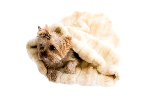 The Dog Squad Cozy Sak Plush Dog Bed, Mink Caramel