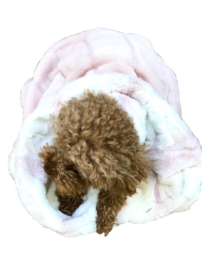 The Dog Squad Cozy Sak Plush Dog Bed, Koala & Ombre Faux Fur Rosewater