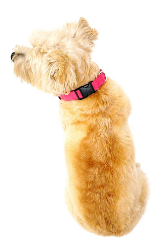 The Dog Squad Celebrity Quick Release Ultra Suede Collar, Fuschia, X-Small, X-Small