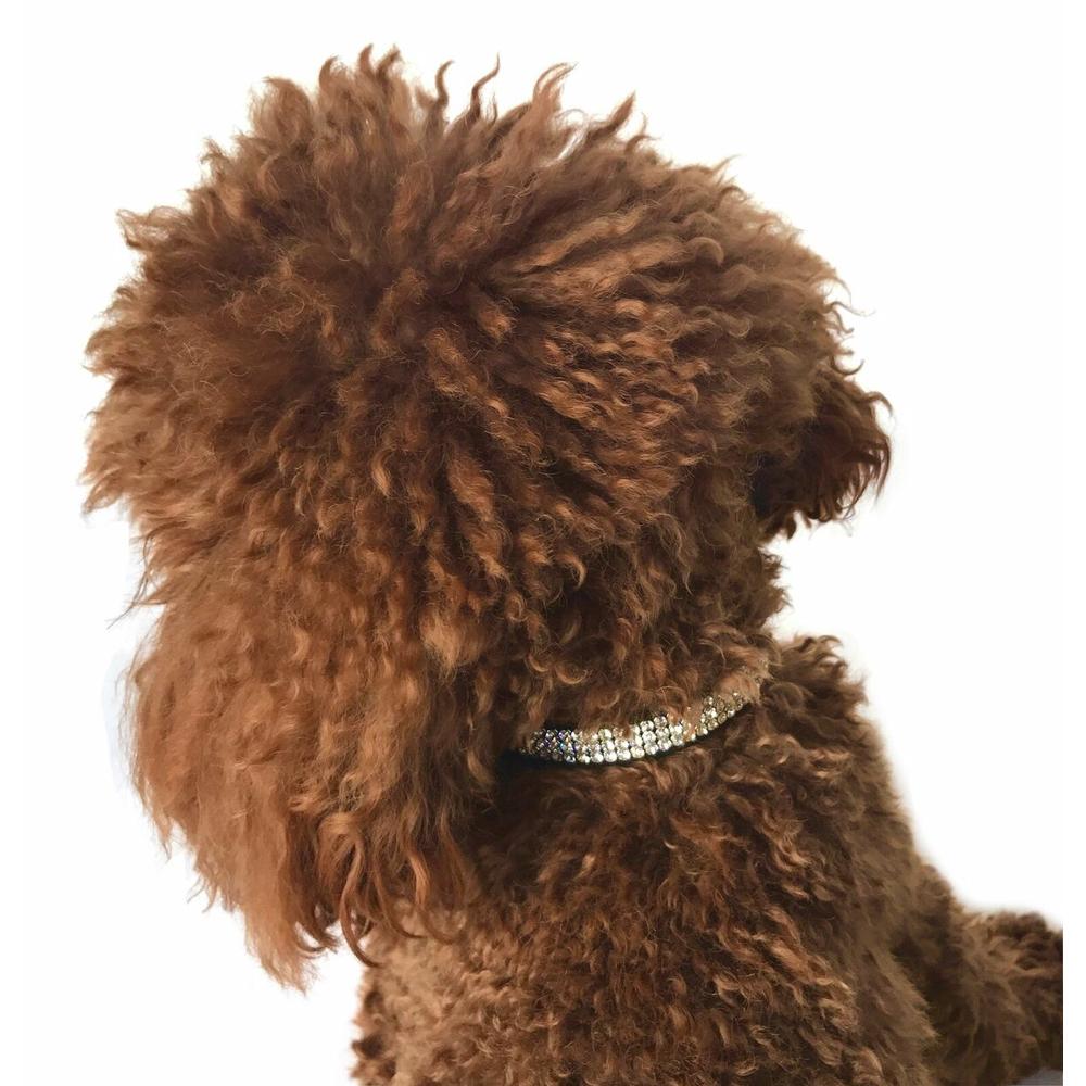 The Dog Squad Movie Star Dog Collar with 3 Row Swarovski, Black, XX-Small, XX-Small