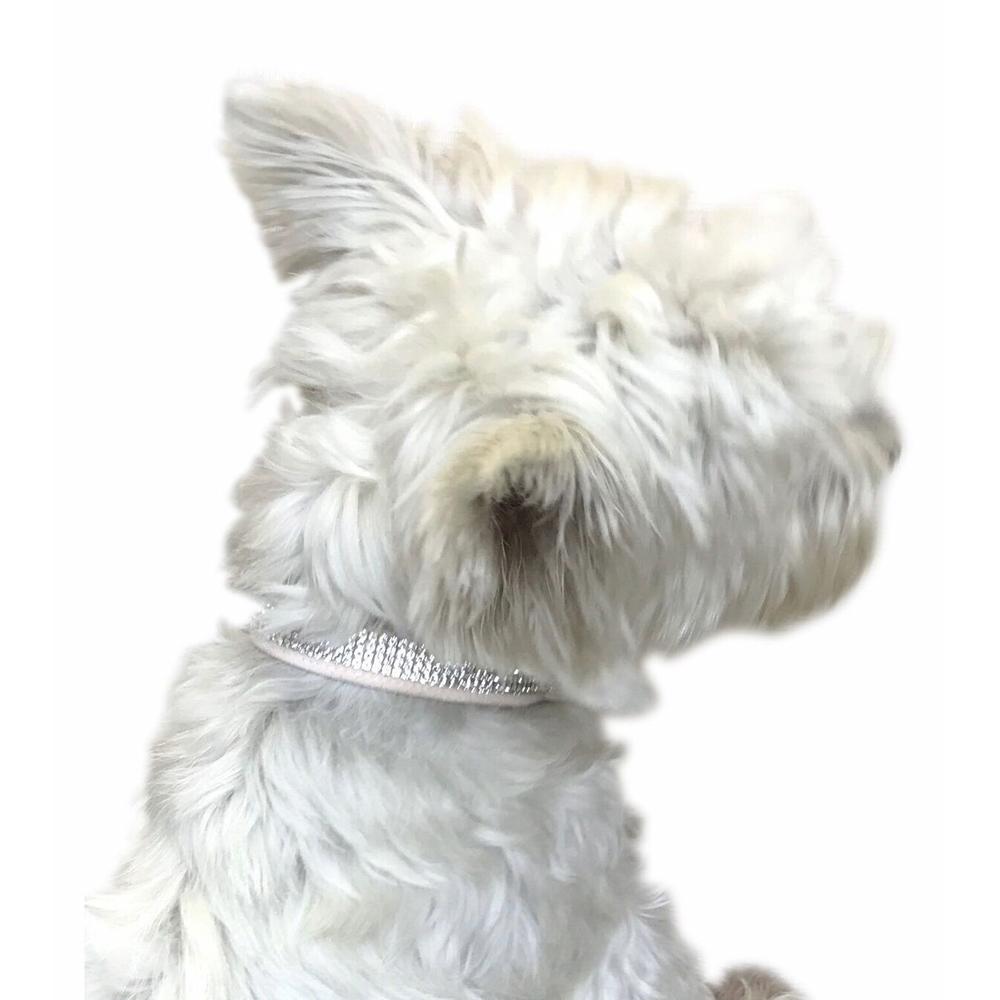 The Dog Squad Super Star Dog Collar with 4 Row Swarovski, Blush, X-Small, X-Small