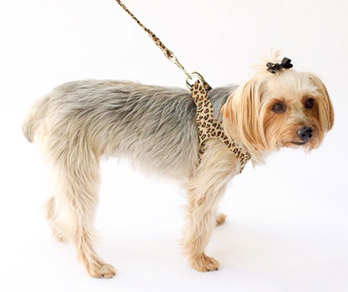 The Dog Squad Starlet Dog Harness, Leopard, X-Small