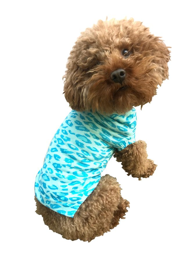 The Dog Squad Sweater, Turquoise Leopard, Small