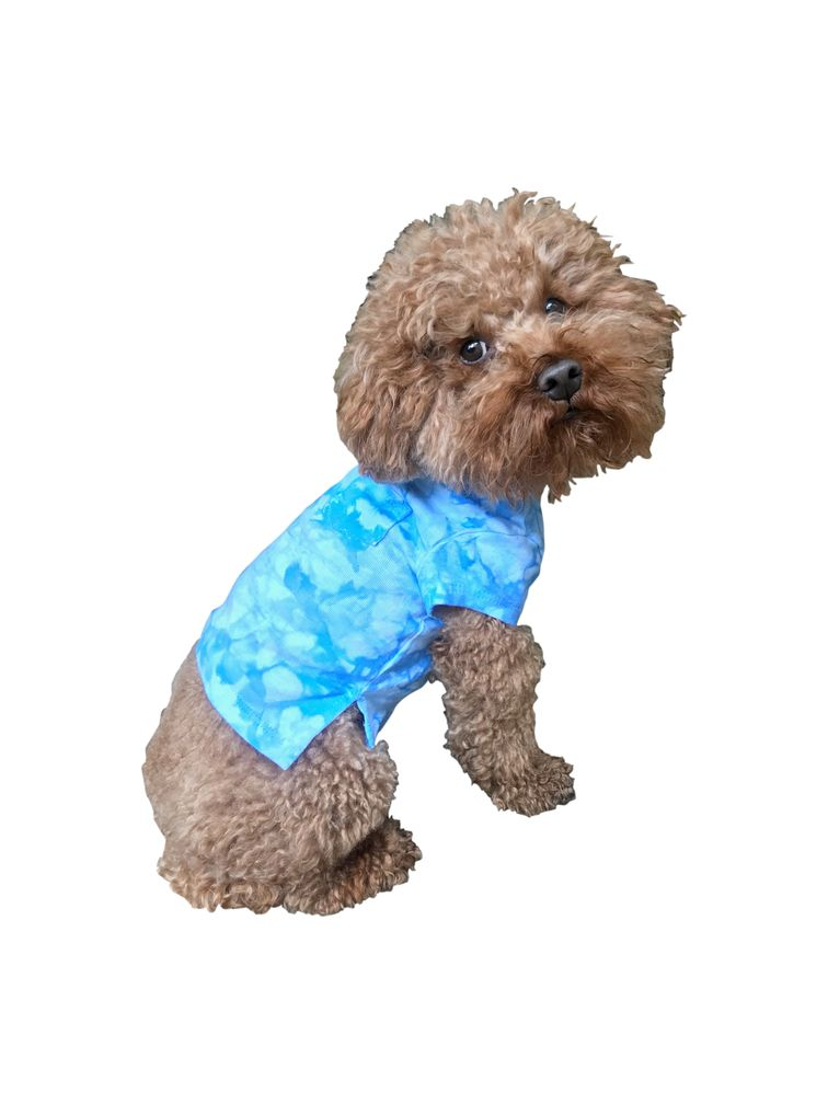 The Dog Squad T-Shirt With Pocket, Sunsets & Clouds Crystal Wash Blue, Small
