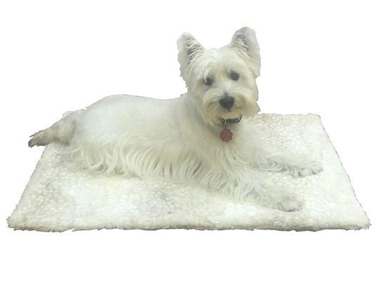 The Dog Squad Blanket, Cheetah Beige, Small
