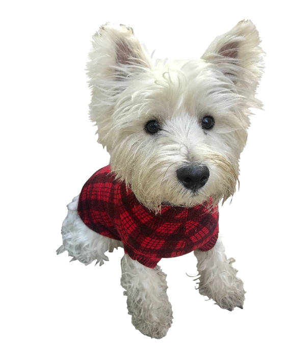 The Dog Squad Sweater, Londoner Plaid, X-Large
