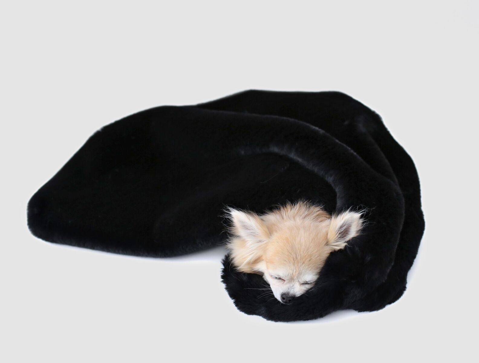 Hello Doggie Divine Dog Blanket, Black, Throw