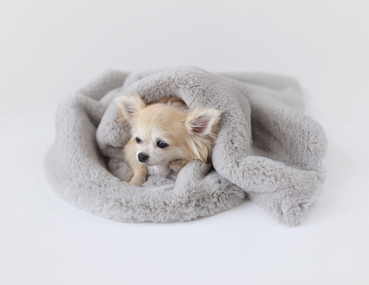 Hello Doggie Divine Dog Blanket, Dove Grey, Small