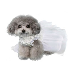 Pooch Outfitters Wedding Dress, Aurora, XX-Small