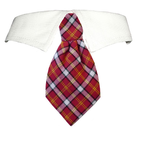 Pooch Outfitters Shirt Collar with Detachable Necktie, Richie, XX-Small/X-Small