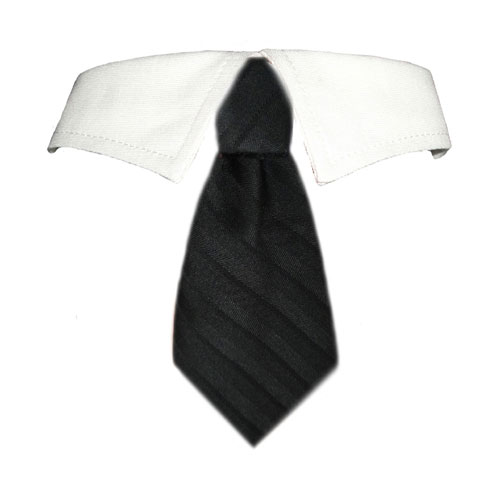 Pooch Outfitters Shirt Collar with Detachable Necktie, David, Small/Medium