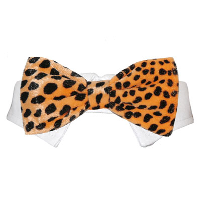 Pooch Outfitters Shirt Collar with Detachable Bow Tie, Roberto Orange, XX-Small/X-Small