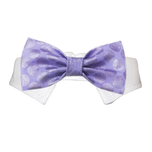 Pooch Outfitters Shirt Collar with Detachable Bow Tie, Dylan, XX-Small/X-Small