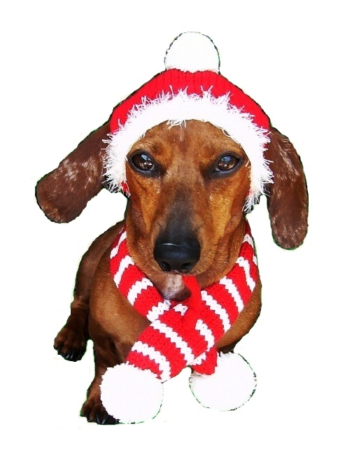 Dallas Dogs Knitted Hat & Scarf, Red Holiday, Large