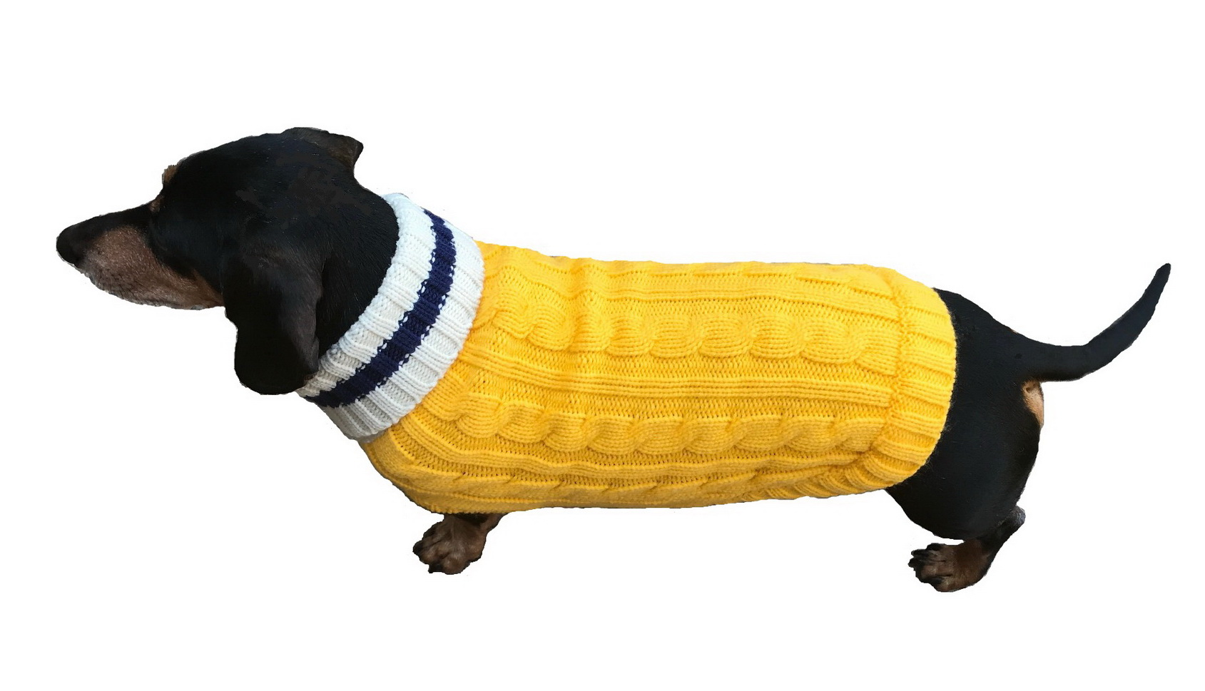 Dallas Dogs Sweater, Preppy Pup Yellow & Navy, 16-in