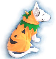 PAMPET / Puppe Love Dog Costume, Pumpkin, Size 5