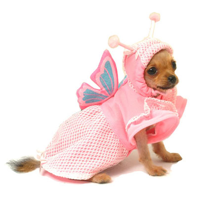 PAMPET / Puppe Love Dog Costume, Lady Butterfly, Size 0
