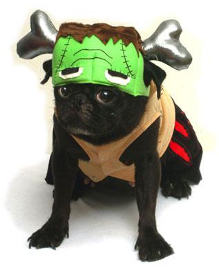 PAMPET / Puppe Love Dog Costume, Barkenstein, Size 0