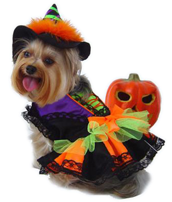 PAMPET / Puppe Love Dog Costume, Halloween Witch, Size 3
