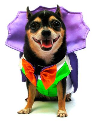 PAMPET / Puppe Love Dog Costume, Dogula