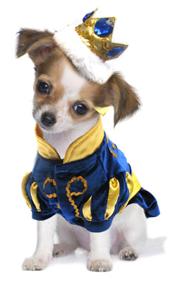 PAMPET / Puppe Love Dog Costume, Prince Charming, Size 0