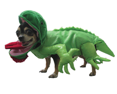 PAMPET / Puppe Love Dog Costume, Iguana, Size 5