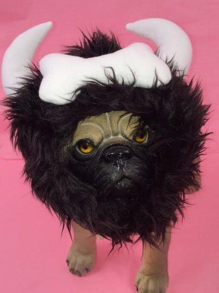 PAMPET / Puppe Love Dog Costume, Viking Hat, Medium