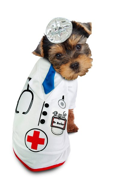 PAMPET / Puppe Love Dog Costume, Doctor Barker, Size 6