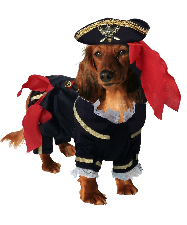 PAMPET / Puppe Love Dog Costume, Buccaneer Pirate, Size 2