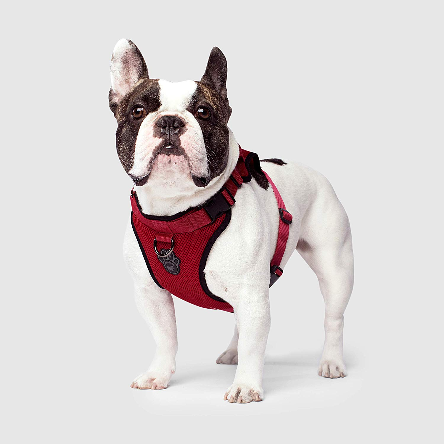 Canada Pooch The Everything Mesh Dog Harness, Red, Small
